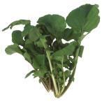 野菜たね ハーブ ロケット(ルッコラ) 1袋(4ml)
