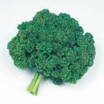 野菜種野菜タネ