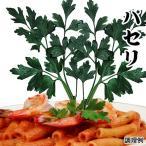 種 野菜たね ハーブ イタリアンパセリ 1袋(1ml) / 野菜のタネ 野菜 種子 国華園