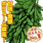 野菜たね エダマメ 恋姫PVP 1袋(30ml) / タネ 種 豆 まめ 枝豆 えだまめ エダ豆 枝まめ 枝マメ