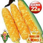 野菜たね トウモロコシ F1スーパースイートバイカラー 1袋(50ml) / タネ 種
