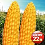 野菜たね トウモロコシ F1 サニーフェスタ 1袋(50ml) / タネ 種