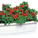 野菜たね ミニ ちび助 1袋(2ml)