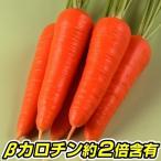 種 野菜たね ニンジン F1べーたろうにんじん 1袋(5ml) / 野菜のタネ 野菜 種子 にんじん 人参 【YTC23】 国華園