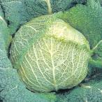 種 野菜たね キャベツ サボイキャベツ 1袋(3ml) / 野菜のタネ 野菜 種子 きゃべつ カンラン 甘藍 国華園