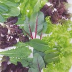 種 野菜たね サラダシリーズ レタスいろいろミックス 1袋(20ml) / 野菜の種 れたす ベビーリーフ 国華園 ytsc140