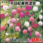 花たね 種 千日紅美色混合 1袋(300mg) / タネ 種 センニチコウ ドライフラワー フラワーアレンジメント 切花 花壇 国華園