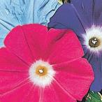 花たね 朝顔 巨大輪朝顔混合 1袋(15粒)