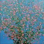 花たね 赤花かすみ草 1袋(1000粒)