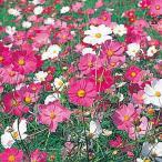 花たね 矮性コスモス混合 1袋(80粒)
