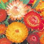 花たね 種 帝王貝細工混合 1袋(200mg) / タネ 種 花壇 切花 生花 ガーデニング 国華園