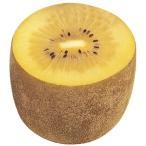 果樹苗 キウイ ジャンボイエロー(メス木) 1株 / 果物苗 フルーツ苗