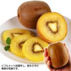 果樹苗 キウイ ジャンボイエロー(メス木) 5株 / 果物苗 フルーツ苗