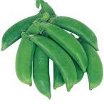 野菜たね 種 マメ エンドウ 晩生スナップ豌豆 1袋(30ml) / エンドウマメ エンドウ豆 豌豆豆 野菜の種 国華園