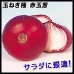 野菜たね タマネギ 赤玉葱 1袋(5ml入)