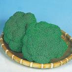 種 野菜たね ブロッコリー F1ブロッコリー 1袋(1ml入)