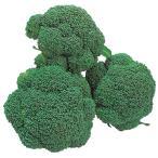 野菜たね 種 ブロッコリー F1ホームブロッコリー 1袋(1ml) / 花野菜 ハナヤサイ 野菜の種 国華園