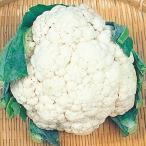 種 野菜たね カリフラワー F1新雪秋 1袋(1ml入)