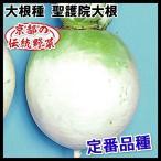 野菜たね 種 ダイコン 聖護院大根 1袋(15ml) / 大根 大根の種 ダイコンの種 丸大根 丸だいこん 京野菜 京都の伝統野菜 煮物向き しょうごいんだいこん 国華園
