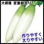 種 野菜たね ダイコン 宮重総太り 1袋(10ml入)