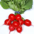 野菜たね ダイコン 赤丸二十日大根 1袋(10ml入)