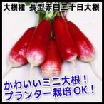 野菜たね ダイコン 長型赤白二十日大根 1袋(10ml入)