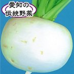 野菜たね カブ 尾張大丸かぶ 1袋(10ml入)