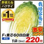 種 野菜たね ハクサイ F1黄芯60日白菜 1袋(3ml入)