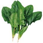 野菜たね ほうれん草 早生ほうれん草 1袋(40ml入)