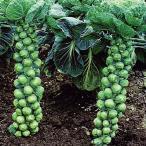 野菜たね キャベツ 芽キャベツ 1袋(2ml入)