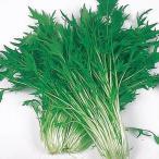 種 野菜たね 健康野菜 早生千筋京水菜 1袋(10ml入)/タネ たね みずな ミズナ 葉菜