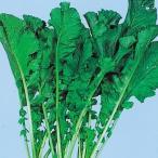 種 野菜たね 健康野菜 葉からし菜 1袋(15ml入)/タネ たね