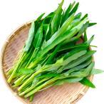 野菜たね 種 中国野菜 エンサイ (空芯菜) 1袋(10ml) / クウシンサイ 空心菜 野菜の種 国華園