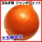 野菜たね タマネギ ジャンボジェット 1袋(5ml入)