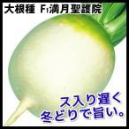 種 野菜たね ダイコン F1満月聖護院 1袋(10ml) / 大根 大根の種 ダイコンの種 丸大根 丸だいこん 京野菜 京都の伝統野菜 煮物向き しょうごいんだいこん 国華園