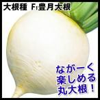 種 野菜たね ダイコン F1豊月大根 1袋(10ml) / 大根 大根の種 ダイコンの種 丸大根 丸だいこん 京野菜 京都の伝統野菜 煮物向き しょうごいんだいこん 国華園