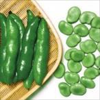 野菜たね マメ ソラマメ 清水一寸 1袋(8粒入)