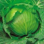 種 野菜たね キャベツ F1ふゆつよし 1袋(2ml入) 冬キャベツ 寒玉系