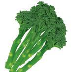 種 野菜たね ブロッコリー F1スティックブロッコリー 1袋(1ml) / 花野菜 ハナヤサイ 茎ブロッコリー スティッコリー 野菜の種 国華園