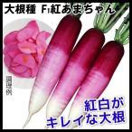 種 野菜たね ダイコン F1紅あまちゃん 1袋(5ml) / タネ たね 大根 だいこん 大根 大根の種 ダイコンの種 【YTC06】画像