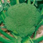 種 野菜たね ブロッコリー F1あまブロ 1袋(0.5ml入)