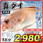 真鯛 タイ 1尾分 青森産 鯛 鮮魚 「姿」・「3枚おろし」・「さく」からお選びください 刺身 天然 国華園