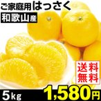 みかん ご家庭用 和歌山産 はっさく 5kg 1箱 送料無料