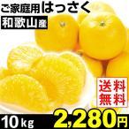 みかん ご家庭用 和歌山産 はっさく 10kg 1箱 送料無料