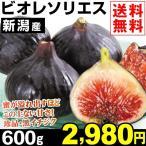 いちじく 新潟産 黒いちじく「ビオレ・ソリエス」 600g 1組 送料無料