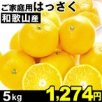 八朔 - みかん 和歌山産 ご家庭用 はっさく 5kg1箱 八朔 食品