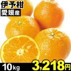 柑橘 - みかん 愛媛産 伊予柑 10kg1箱 いよかん 食品