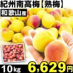 生梅 和歌山産 紀州南高梅・熟梅 10kg1箱 うめ 冷蔵 食品