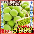 ショッピング梅 梅 青森産 生梅 【豊後梅】 5kg1組 送料無料 生梅 冷蔵便 食品