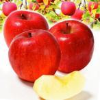 リンゴ 山形産 ひがしねふじ 10kg1箱 東根ふじ 果物 国華園